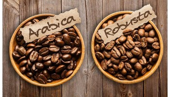 Кофе арабика и робуста: в чем разница