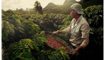 Лучший фермерский кофе со всего мира